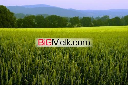 فروش 25هکتار زمین کشاورزی با چاه آب