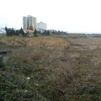 زمین 21000متری ساحلی در مازندران رویان موقعیت اکازیون