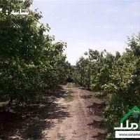 فروش فوری باغ در بکه شهریار
