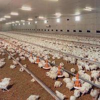 فروش مرغداری گوشتی و زمین در کاشان