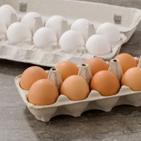 فروش کارخانه مجهز و اتوماتیک بسته بندی تخم مرغ