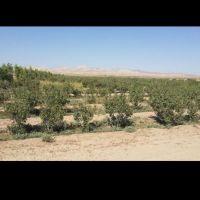 1500 هکتار زمین کشاورزی در ورامین تهران
