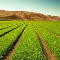 فروش مزرعه 400 هکتاری در استان البرز