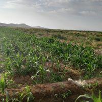 فروش باغ و زمین کشاورزی در چناران مشهد