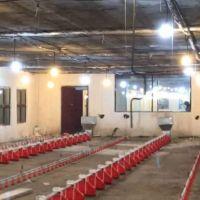 فروش مرغداری گوشتی ۲۰۰۰۰ تایی