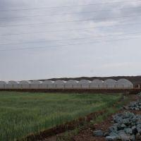 فروش فوری زمین جهت احداث گلخانه