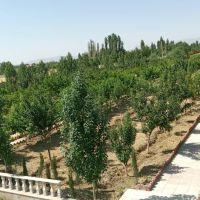 یک هتکار و 110 متر مربع باغ در کرج ( نظر آباد )