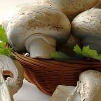 فروش کارخانه قارچ  شیراز با نام گل همیشه بهار