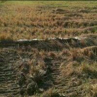 فروش زمین کشاورزی11هزارمتری دارای سندمالکیت تک برگ