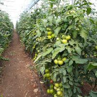 فروش زمین کشاورزی و گلخانه در همدان