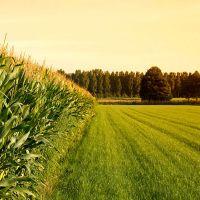 زمین کشاورزی(مزرعه)110 هکتاری