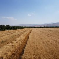 فروش ۱۳۰ هکتار زمین کشاورزی بر اتوبان زنجان قزوین