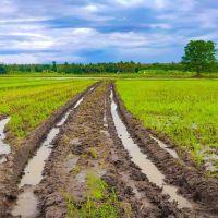 ملک زمین کشاورزی دارای ۶ عدد سند ششدانگ جدید