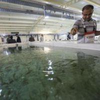 فروش مزرعه تولیدبچه ماهی سردآبی مداربسته درطالقان