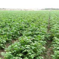فروش زمین کشاورزی جیرفت