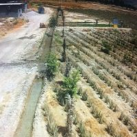 فروش زمین کشاورزی 16هکتار بندرعباس