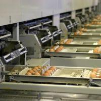 کارخانه بسته بندی تخم مرغ