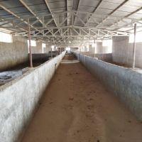 فروش مزرعه پرورش شترمرغ در ساوه
