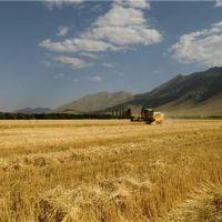 فروش زمین کشاورزی قزوین