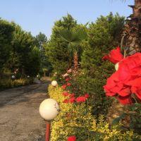 فروش باغ تجاری گردشگری صنعتی شهرکی تالار نمایشگاهی