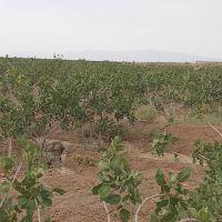 فروش 87 هکتار مزرعه در اصفهان