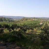 فروش زمین کشاورزی با منظره ای عالی
