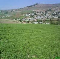 فروش زمین کشاورزی  2500 هکتار زراعی در همدان