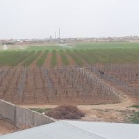 مزرعه کشت و صنعت ۳۰هکتاری در تاکستان