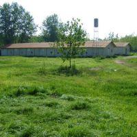 فروش مرغداری گوشتی 15000 قطعه ای در شمال(گیلان-لنگرود-چمخاله